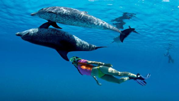 Swimmimg with dolphins