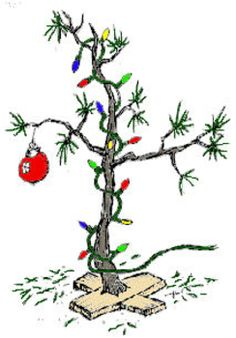Sparse spruce